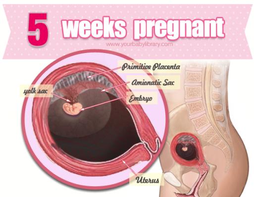 Мажет на 5 недели беременности